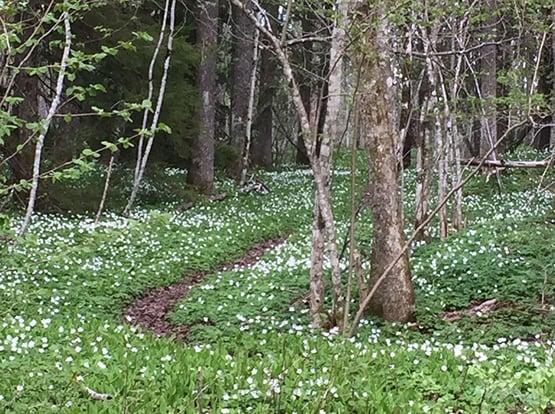 Sti i skogen